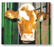 RFID畜牧业应用