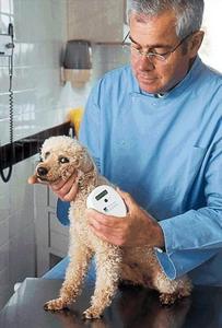 上海宠物狗拥有电子身份证