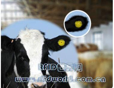 rfid耳标控制动物结核病